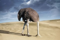 ostrich-head-in-sand1