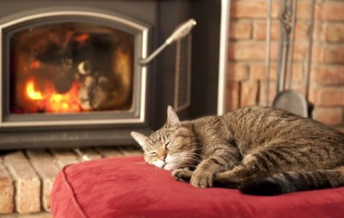Cat+by+fireplace+770x490[1]
